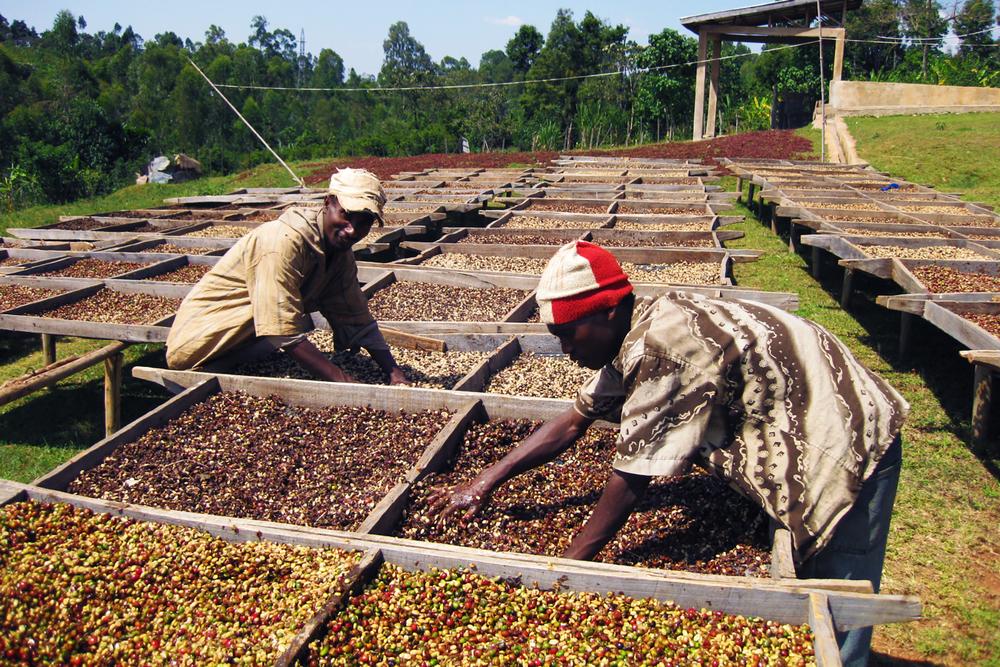 依索比亞 耶加雪菲產區 沃卡處理場小農