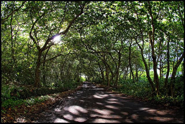 瓜地馬拉 歐卡娜莊園 黑鑽 日曬