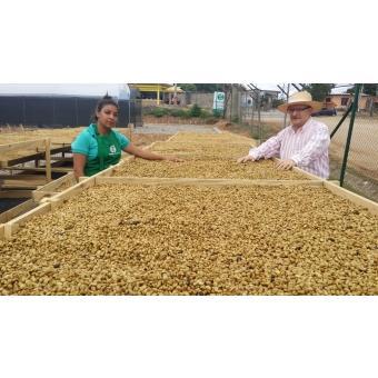 尼加拉瓜 蠻牛莊園 帕卡瑪拉