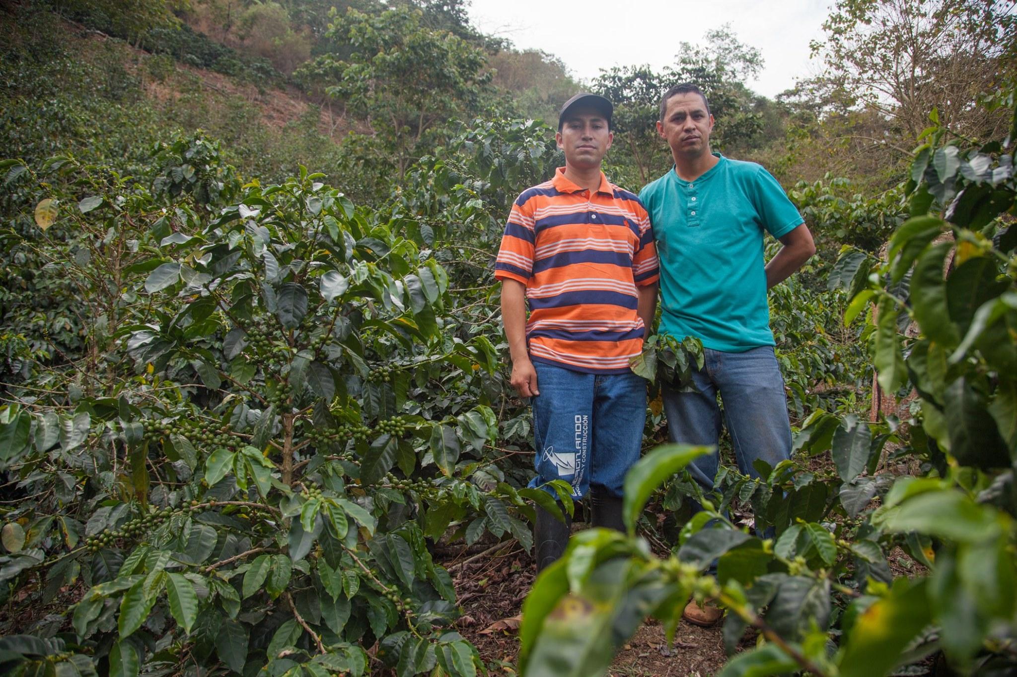 哥倫比亞  賽諾維亞莊園 水洗(微批次)