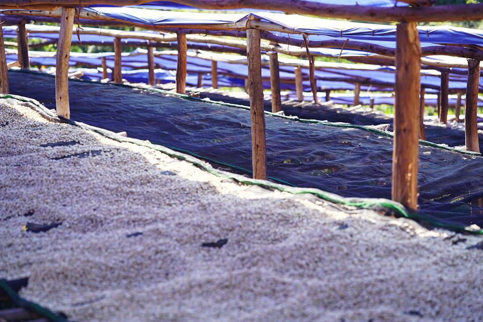依索比亞耶加雪菲 孔加沃特小農日曬